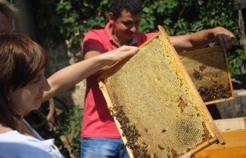 Пчеломатки Говерла карпатские 2021, Мукачево