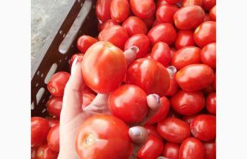 Продам помидор, Киев