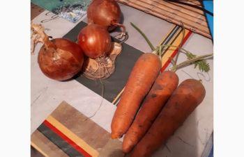 Продам морковь поставщика, Херсон