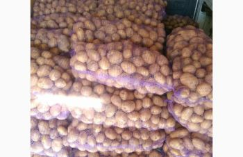 Картошка Белароса, Хмельницкий