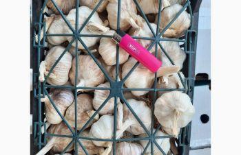 Продам чеснок, Киев