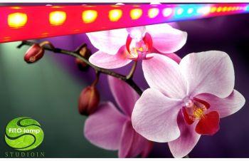 Светильник для орхидей, Днепр