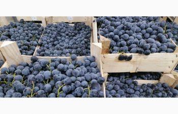 Продам виноград, Львов