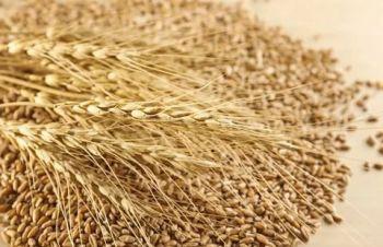 Постоянно закупаю зерноотходы зерновые, масличные, бобовые, Кропивницкий