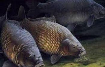 Продам живую рыбу, Харьков