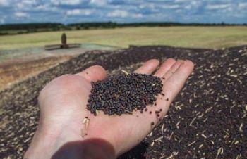 Куплю зерновідходи соняшника, зерновідходи ріпаку, Киев