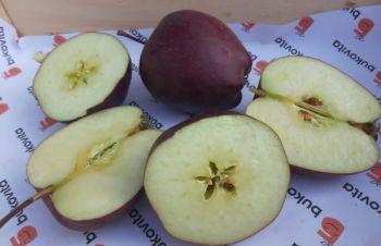 Продам яблоки от произодителя, Хмельницкий