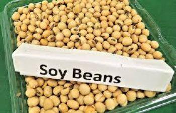 Куплю сою ГМО з ПДВ на виробництво, Хмельницкий