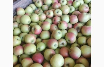 Продам яблоко (Джонаголд), Запорожье