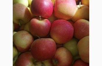 Продам яблоко (Гала), Запорожье