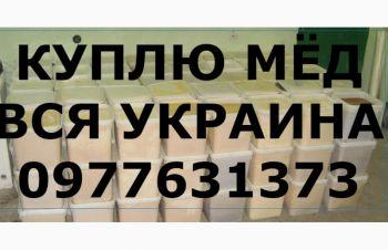 Куплю мёд В ПОЛТАВСКОЙ и соседние обл. САМОВЫВОЗ своим транспортом, Полтавская обл.