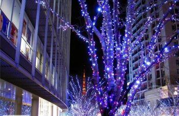Праздничное новогоднее оформление, украшение деревьев гирляндами, подсветка деревьев, Киев