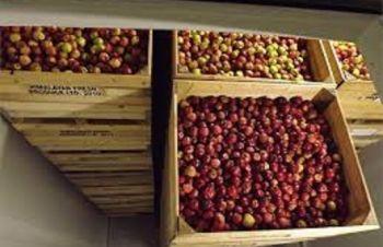 Камера хранения фруктов, Харьков