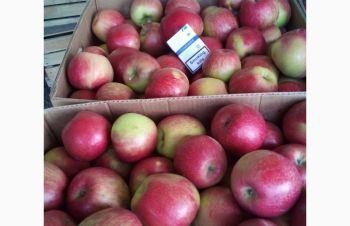 Продам яблуко, Хмельницкий