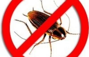 Уничтожение клопов, тараканов, других насекомых, Харьков